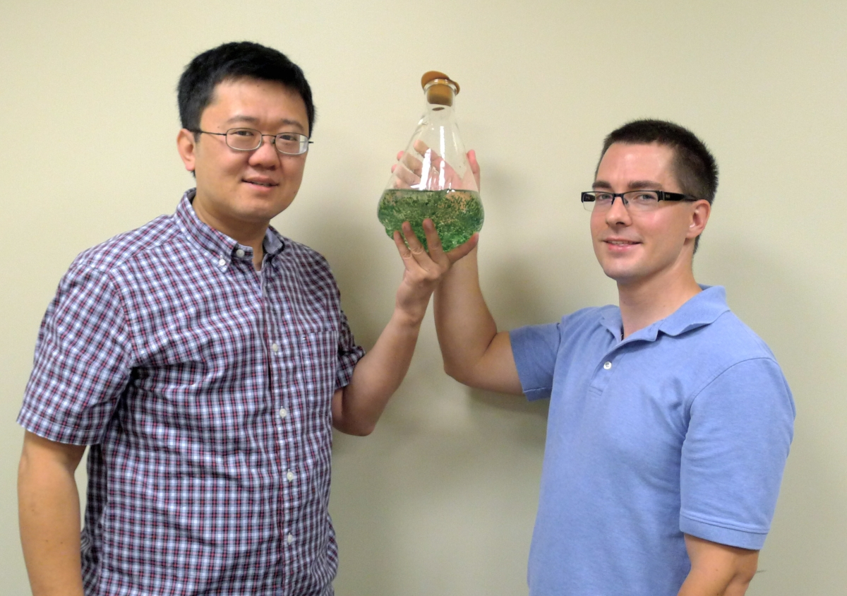 Liu and Hillwig hold a flask of cyanobacterium (green algae) Hapaloshiphon welwitschii UTEX B1830, the native producing organism of WelO5 protein, a novel halogenation enzyme that is capable of converting an aliphatic C-H bond to a C-Cl bond in a freestanding small molecule.